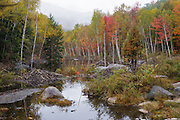 Wetlands area along the East Branch of the Pemigewasset River during the autumn months in Lincoln, New Hampshire USA.