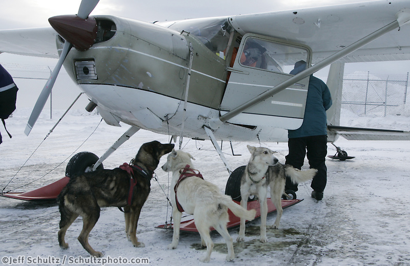 Dropped dogs are tied up outside Bob Elliots' plane at Unalakleet on Sunday.
