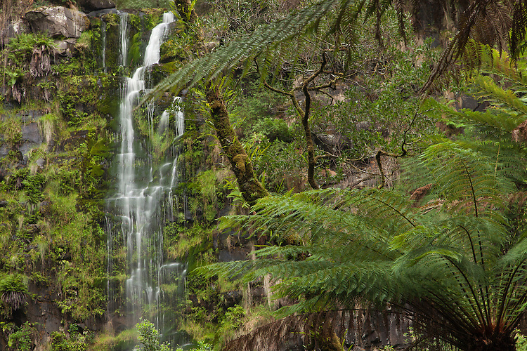 Erskine Falls located just outside of Lorne is a highlight in the Otway national park.