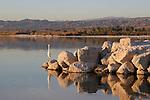 Great egret at Salton Sea SRA