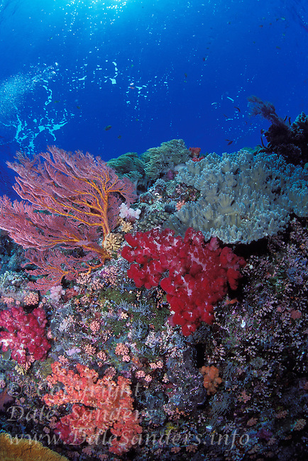 Soft corals and gorgonians adorn a Coral Reef , Republic of Palau, Micronesia.