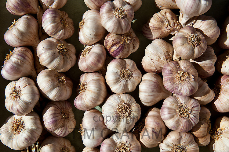 Garlic plaits, violet, on sale at food market in Bordeaux region of France