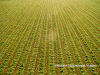 63801-10808 Alfalfa field after it's been cut and before it is baled-aerial Marion Co. IL
