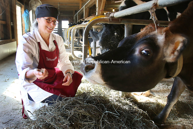 GOSHEN CT. 24 November 2015-112415SV08-Kimberly Thorn checks on one of the cows, &ldquo;Daydream&rdquo;, that gives her milk for chocolates she makes at Thorncrest Farm in Goshen Tuesday. <br /> Steven Valenti Republican-American