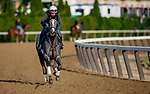 JUNE 06: Tacitus prepares for The Belmont Stakes at Belmont Park in Elmont, New York on June 06, 2019. Evers/Eclipse Sportswire/CSM