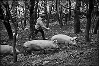 Europe/France/Aquitaine/64/Pyrénées-Atlantiques/Pays-Basque/Saint-Étienne-de-Baïgorry: Enaut Larre, élève  pour Eric Ospital charcutier à Hasparren des cochons Ibaïona plein air à la  Ferme Belarrea
