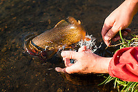 An angler releases a Yellowstone cutthroat trout into Expedition Lake in Hilgard Basin in the Madison Range.