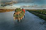 BROEK OP LANGEDIJK - Tuinder Peter Vroegop, beter bekend als de boerenkoolkoning van Noord Holland, is donderdag druk bezig met het snijden en vervoeren over het ijs. De akkers van Vroegop zijn gelegen in het natuurgebied Oosterdel.  Het boerenkoolseizoen loop tot eind februari zodat Vroegop dan overschakelt op de aardappelen. Volgens Vroegop is de kwaliteit goed maar de prijs te laag.