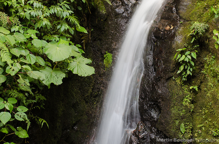 La Cascada waterfall in Monteverde Cloud Forest Biological Reserve, Monteverde, Costa Rica