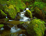 Siskiyou National Forest, OR  <br /> Emily Creek flowing over mossy boulders and forest understory on the Redwood Nature Trail near Loeb State Park