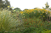 Summer border at Great Dixter with miscanthus, helenium, oenothera and cosmos