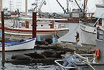 California sea lions on docks at Astoria