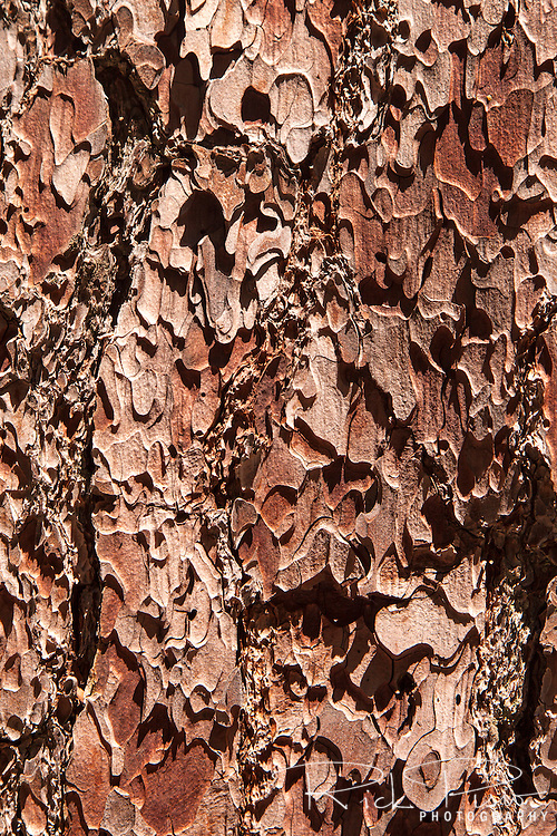 Detail of the bark of a sequioa tree in Kings Canyon National Park.