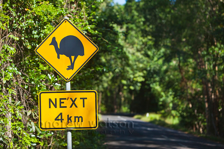 Cassowary crossing sign.  The cassowary is an endangered species of flightless bird, native to the rainforests of north Queensland.  Daintree National Park, Queensland, Australia