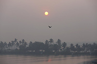 A bird flies over wetlands at sunrise on the outskirts of Kolkata.<br />