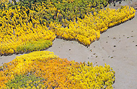 Southeast of Westcliffe, Colorado, aspen in fall
