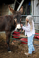 Deb Kidwell grooms AMJR PCF Genesis, an American Mammoth Jackstock, on Monday, Nov. 22, 2010 in the food pin at Lake Nowhere Mule and Donkey Farm in Martin, Tenn. Kidwell breeds American Mammoth Jackstock, the only American breed of Ass, and one started by George Washington. The breed, however, is dying off with the mechanization of farm equipment.