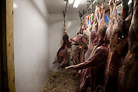 Deer, elk, and antelope, carcasses hang in a fridge before butchering at House of Meats wild game processor in Great Falls, Montana, USA.