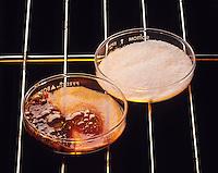 ORGANIC &amp; INORGANIC SUBSTANCES: SUGAR &amp; SALT (2 of 3)<br /> Heating Sucrose And Salt<br /> Organic substances (sucrose) have much lower melting points than inorganic substances (salt). Common salt (NaCl) melts at 804 degC. Cane sugar (C12 H22 O11) begins to char at 160 degC.