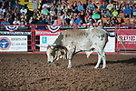 Bull during first round of the Fort Worth Stockyards Pro Rodeo event in Fort Worth, TX - 8.2.2019 Photo by Christopher Thompson