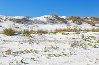 White sand dunes along the beach at Anastasia State Park near St. Augustine
