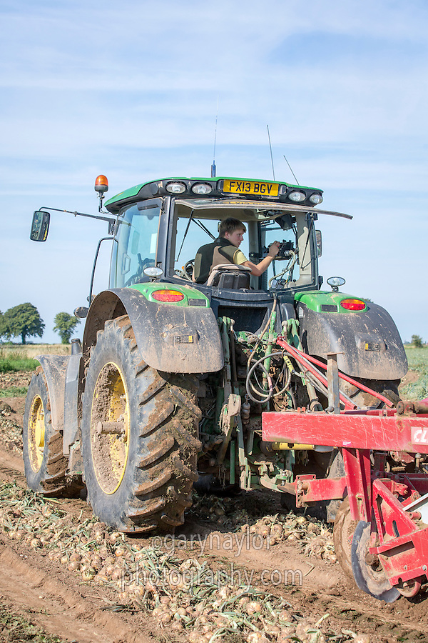 Harvesting onions - Lincolnshire, August