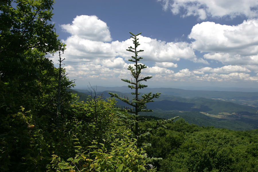Shenandoah National Forest has waterfalls and wildlife that attract visitors from around he world.