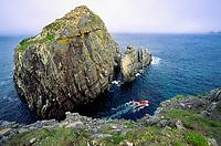Bird rock atlantic puffin colony, Fratercula arctica, and tour zodiac, Bonavista Newfoundland, Canada, Atlantic Ocean