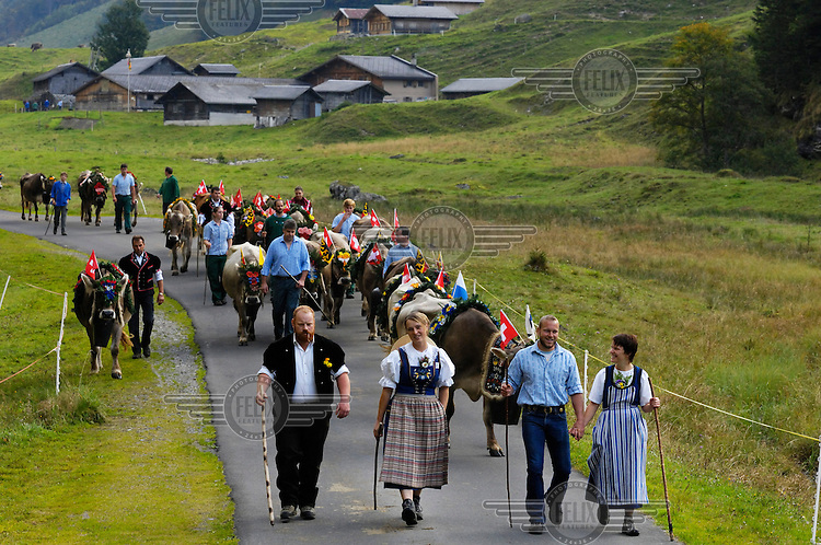 People in traditional costume leading cows decorated with flowers, flags and large bells in the seasonal migration of cows from Alpine pastures down to lower land for winter. Behind is the alpage, at 1500 metres where the farmers and their employees live for the summer and produce cheese. This fixed transhumance is one of the cornerstones of traditional Swiss farming, and such rituals are undergoing a revival.