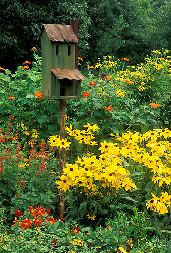 Rustic birdhouse livens up blooming summer garden of orange and yellow flowers, midwest USA