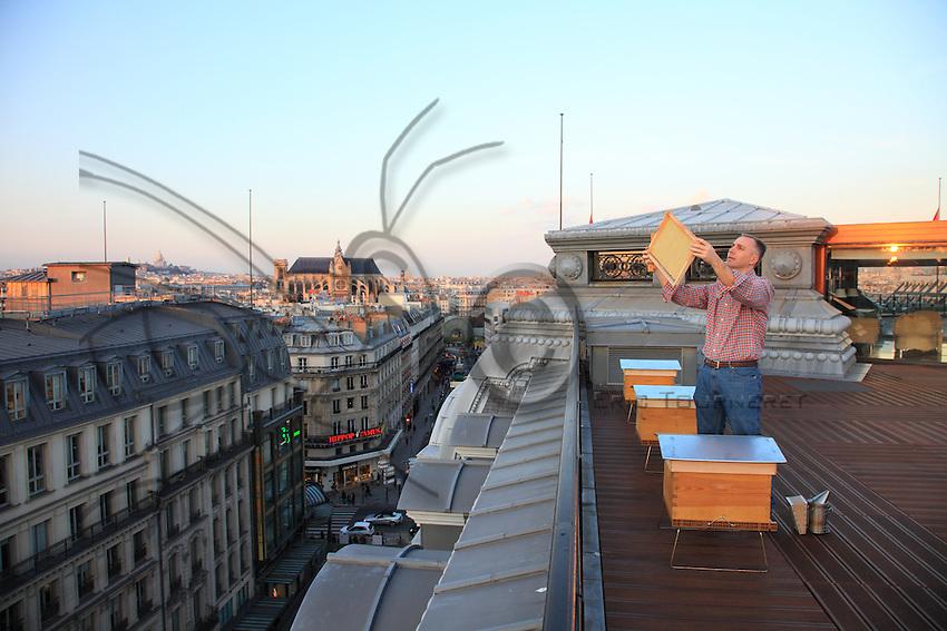 Nicolas Geant, beehive, urban beekeeper, Paris, honey, Louis Vuitton head office, Pont Neuf,