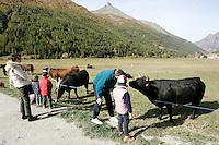 Bambini osservano dei bovini al pascolo nei pressi di Cogne, nel Parco Nazionale del Gran Paradiso, in Valle d'Aosta.<br /> Scenic landscape with grazing cattle at Cogne, Gran Paradiso National Park, Aosta Valley.<br /> UPDATE IMAGES PRESS/Riccardo De Luca