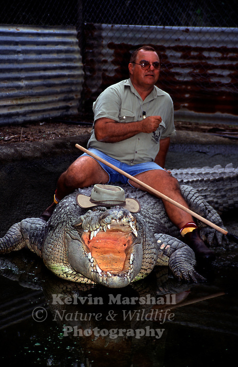 Mick Tabone - Johnstone River Crocodile Farm sits on his friend 'Gregory' a 5.5 metre salt water crocodile.