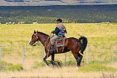 Gaucho en patagonie