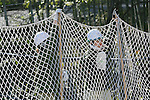 Zookeepers hold up a net in an attempt to capture a escaped chimpanzee during an Escaped Animal Drill at Tama Zoological Park on February 7, 2017, Tokyo, Japan. The annual escape drill is held in Tokyo zoos for zookeepers to practice how they would need to react in the event of a natural disaster or another emergency. This year a member of staff wearing a chimpanzee costume was captured and subdued by other zookeepers before it could escape out onto the streets of Tokyo. During the drill, participants used large nets, sticks and tranquilizer guns to make sure the monkey didn't get away. (Photo by Rodrigo Reyes Marin/AFLO)