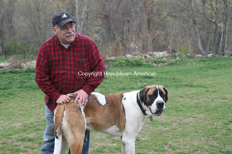 NAUGATUCK, CT, 28 April, 2017 - 042817HOLW12 - Burgess Rocky Vitale pets Ollie the St. Dane at the Naugatuck Dog Park Thursday afternoon. Laraine Weschler Republican-American