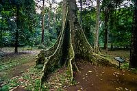 Indonesia, Java, Bogor. The Bogor Botanical Gardens (Kebun Raya).