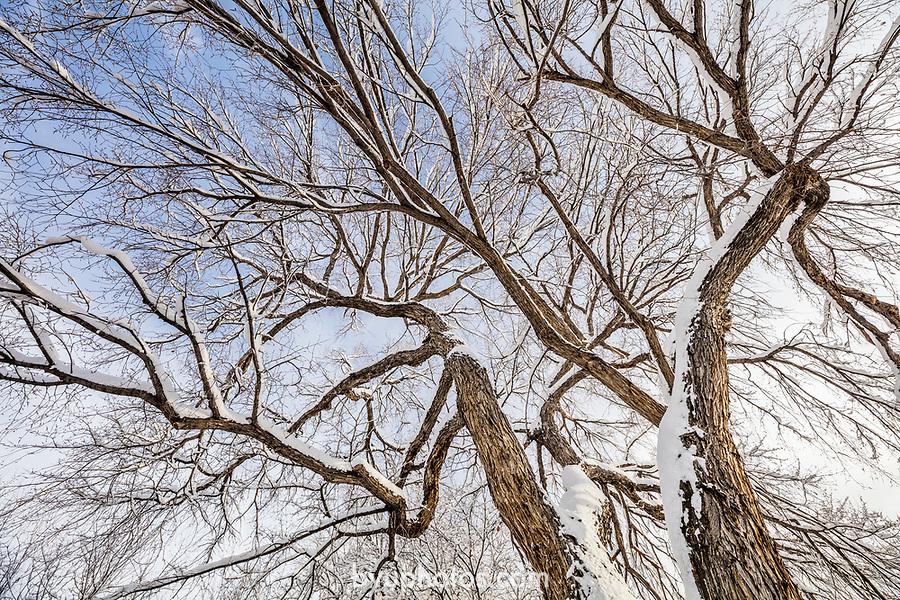 _YU18838<br /> <br /> 1701-01 GCS Snow<br /> <br /> December 9, 2016<br /> <br /> Photography by Nate Edwards/BYU<br /> <br /> © BYU PHOTO 2016<br /> All Rights Reserved<br /> photo@byu.edu  (801)422-7322