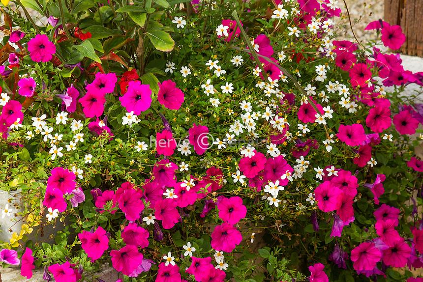 Flower box with Petunia, Bidens