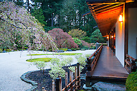 Pavilion with lights on at dawn in Spring facing Sand garden and cherry tree blossoms in the Flat Garden (hira niwa) of the Portland Japanese Garden