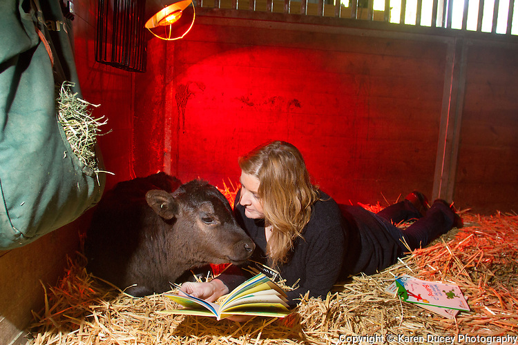 Clarence, a calf rescued from a ditch, is comforted by volunteer Caroline Morgan who reads a Dr. Seuss book to him at the Northwest Equine Stewardship Center, in Snohomish, Washington on April 13, 2014. (photo by Karen Ducey Photography/karenducey.com.  All rights reserved)