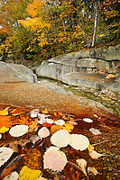 Fallen autumn leaves in puddle along side of creek, White Mountains, New Hampshire, US