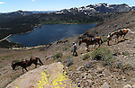 Views from a horseback ride to Lost Lakes in Alpine County, near Hope Valley, Ca., on Wednesday, Aug. 24, 2011..Photo by Cathleen Allison