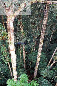 Rain forest, looking down through canopy, Amazon River Basin, Peru