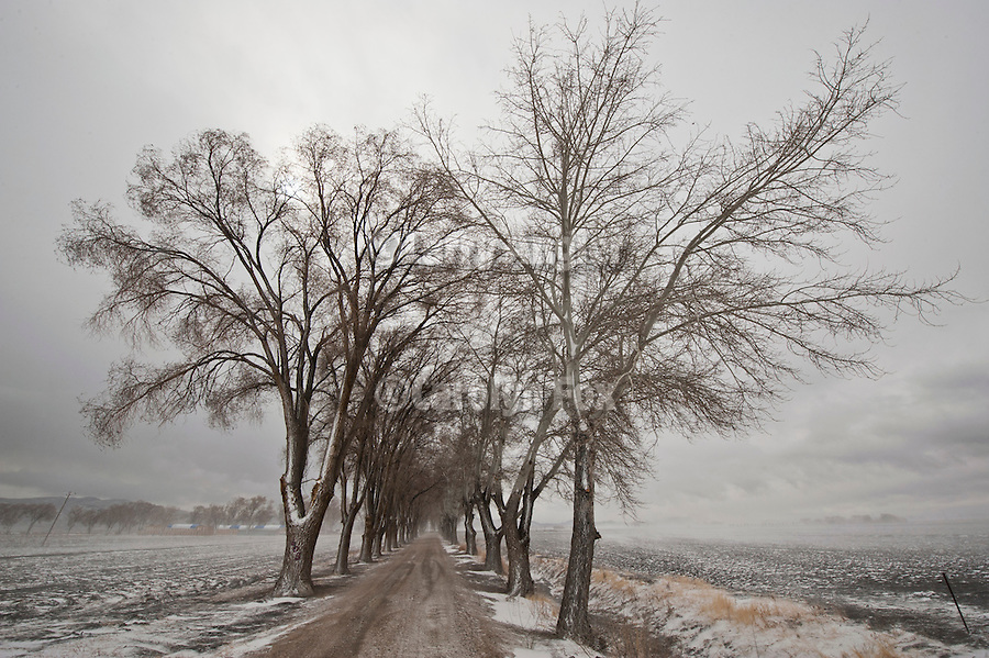 Snowy tree lined farm road in the Lower Valley, Pershing County, Nev.