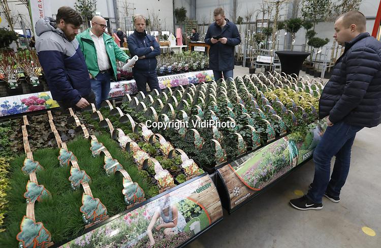 Foto: VidiPhoto<br /> <br /> WIJK EN AALBURG – Honderden vertegenwoordigers van Europese tuin- en groencentra kwamen donderdag al naar Wijk en Aalburg voor een van de grootste particuliere tuinbeurzen van ons land. Vier dagen lang staan tienduizenden bomen, struiken en planten in alle soorten, maten en variëteiten geëxposeerd bij Arie Bouman Tuinplanten waaruit klanten hun bestellingen kunnen doen voor het komende voorjaar. Populair is volgens eigenaar Dirk Bouman de eetbare tuin. Naast rozen, hortensia's en het nieuwe concept Endless Summer van eigen kweek, exposeert de distributeur materiaal van zo'n 350 kwekers uit heel Europa. Bouman levert zo een totaalpakket, inclusief etikettering, aan de internationale tuincentra. De voorjaarsbeurs duurt tot en met dinsdag.