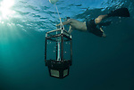 Chris Glasby collecting the light trap used to collect specimens at night in the waters around Lizard Island.