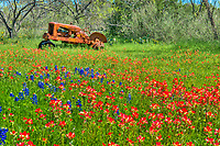 Tractor with Wildflowers - We captured this field of bluebonnets, and indain paintbrush wildflowers along with this old tractor landscape in the Texas Hill Country this spring.