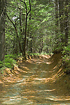 Deep Rutted Road through Forest, Chattahoochee NF, GA
