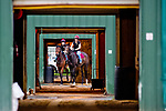 BALTIMORE, MD - MAY 16: Horses head to the track during preparations for the Preakness at Pimlico Race Course on May 15, 2018 in Baltimore, Maryland (Photo by Scott Serio/Eclipse Sportswire/Getty Images)